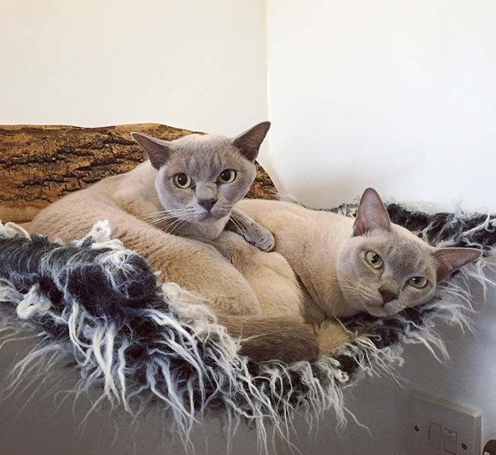 cat-bed-brankley-cattery-1