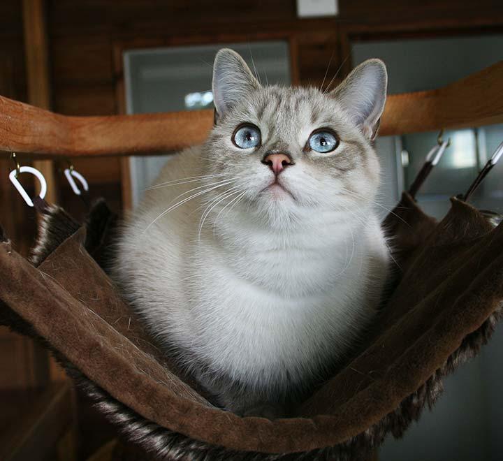 cat-hammock-brankley-cattery-2